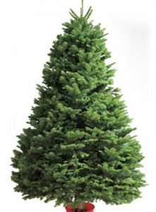 6 Fire Prevention Tips for Real Christmas Trees